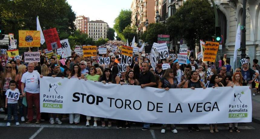 Toro de la Vega 2011 BASTA YA
