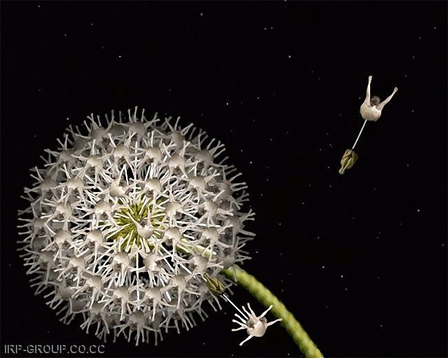cecelia-webber-flores-a-la-humana Quiero Algo Diferente (1)