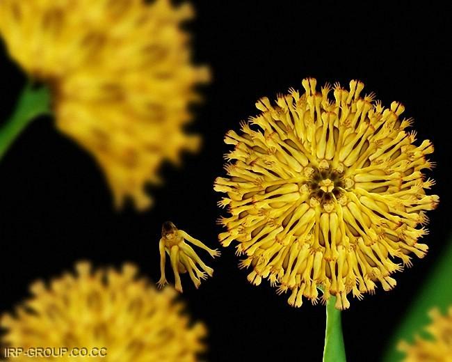 cecelia-webber-flores-a-la-humana Quiero Algo Diferente (10)