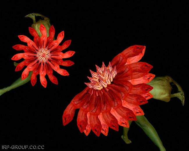 cecelia-webber-flores-a-la-humana Quiero Algo Diferente (11)
