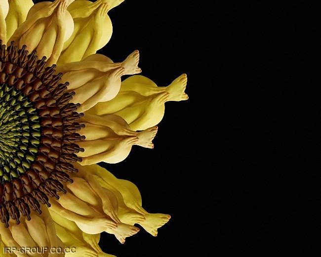 cecelia-webber-flores-a-la-humana Quiero Algo Diferente (13)