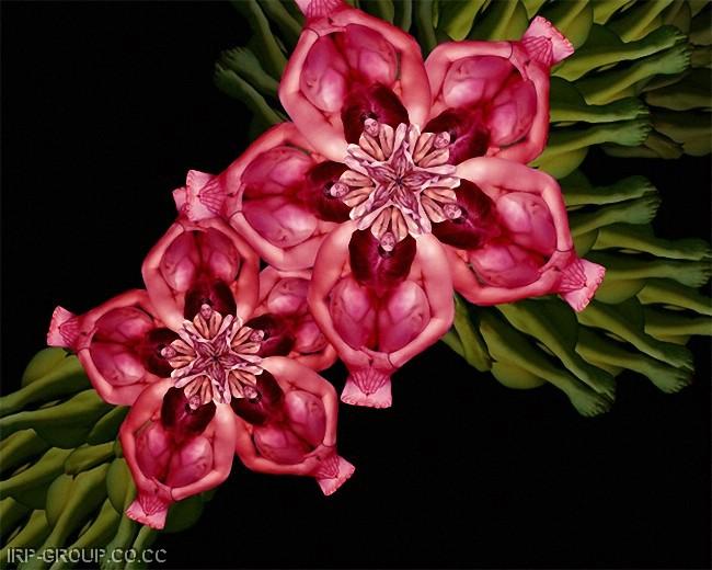 cecelia-webber-flores-a-la-humana Quiero Algo Diferente (19)