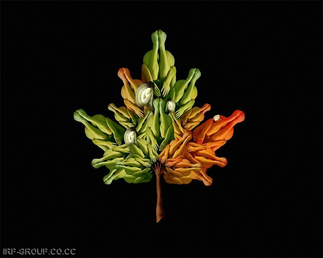 cecelia-webber-flores-a-la-humana Quiero Algo Diferente (2)