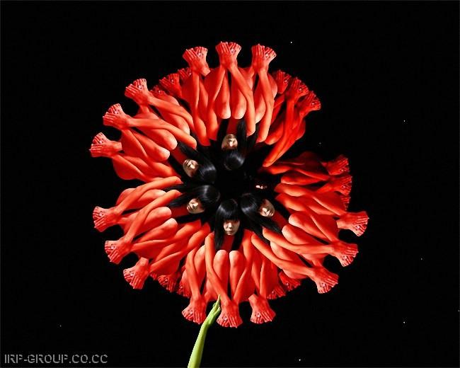 cecelia-webber-flores-a-la-humana Quiero Algo Diferente (7)