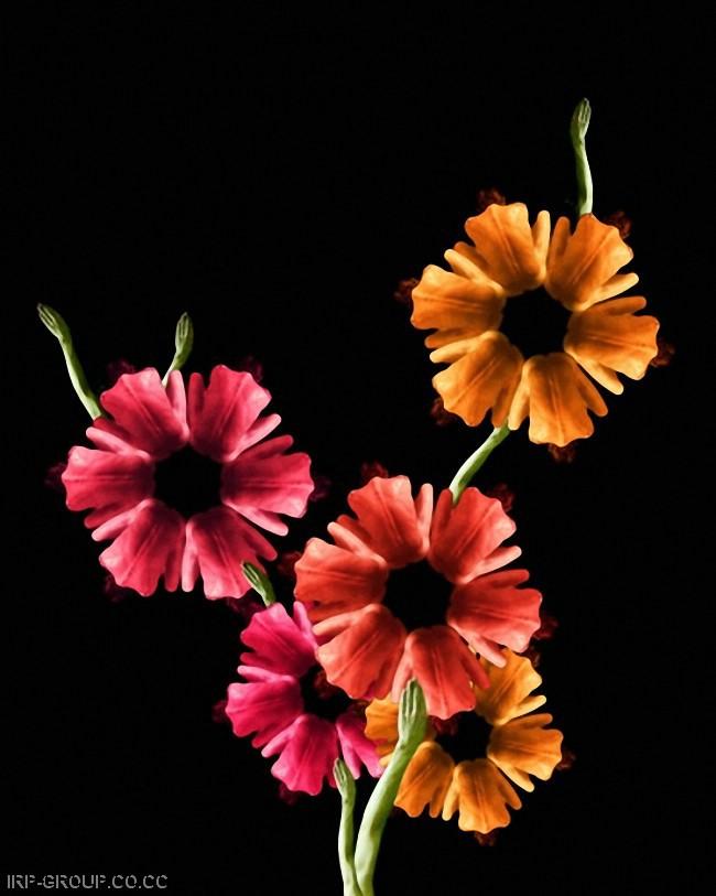 cecelia-webber-flores-a-la-humana Quiero Algo Diferente (8)